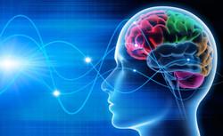 Modélisation - cerveau