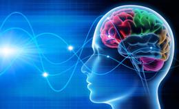 Le Flagship Human Brain Project cherche de nouveaux partenaires