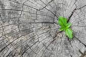Appels 2016 du défi 2 : Bio-innovation pour des produits et services durables (2 étapes)