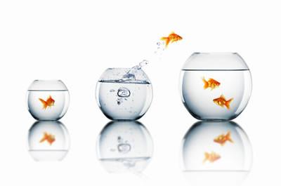 Agrandissement de poisson change de bocal for Poisson de bocal
