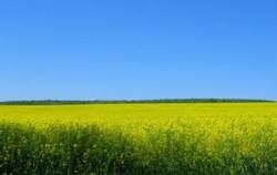biofuels LCE 11-14